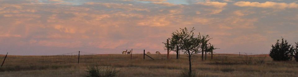 SWL - Dawn with Pronghorn 2015